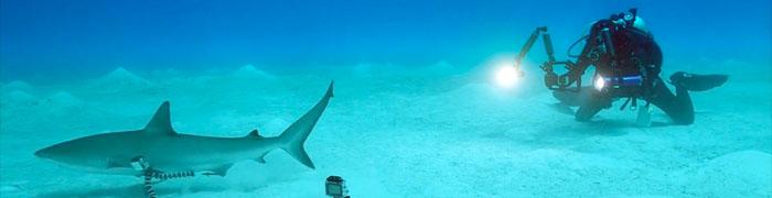 1-shark-lion